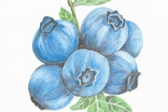 2019.08.15, Blueberry